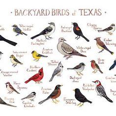 Birds For Kids, Small Birds, Bird Egg Identification, List Of Birds, Bird Guides, Common Birds, Bird Poster, Backyard Birds, Bird Pictures