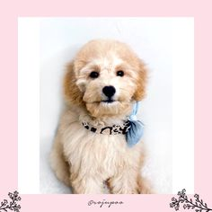 Soju x Velvet Bouffant Bow (Powder Blue) and Print Panther Dog Collar Big Dogs, Large Dogs, Bow Tie Collar, Mild Soap, Panther, Your Pet, Collars, Powder, Velvet