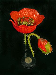 Botanical model: Poppy | Flickr - Photo Sharing!