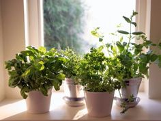 herbs indoor garden winter year round