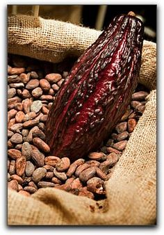 Health Benefits of Choffy | Choffy – Brewed Chocolate