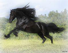 Black Stallion the pride of the pathway!