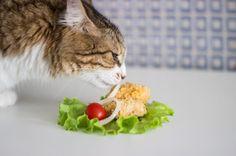 Simas would eat chiken every day  #cat #catsofinstagram #chiken #food #yummy #tasty #home #allpetsgotokitchen #petsandthekitchen