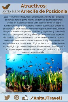 ¡Conocé, viví, #SalíYViajá con nosotros! No te perdás la oportunidad de conocer el Arrecife de Coral :-D