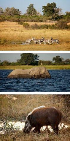 Botswana Safaris to DumaTau Camp in the Linyanti Wildlife Reserve