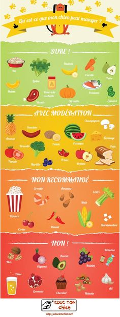 30 Infographics that can Save Your Pet /// Pet Safety Tips + Free Printable Pet Emergency Sticker - The Cottage Market Pets are humanizing. They remind us we have an obligation and responsibility to preserve and nurture and care for all life. Food Dog, Dog Food Recipes, Healthy Recipes, Home Cooked Dog Food, Food Tips, Healthy Tips, Food Ideas, Cooking Recipes, Dog Hacks