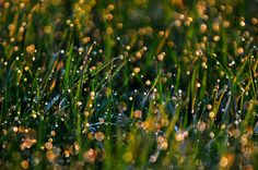 Dewy Dawn by Éva Szombati on 500px