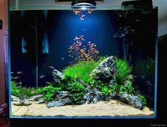 20 Aquascaping Ideas for Inspirations #AquariumTanksIdeas