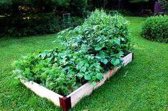 As melhores plantas para plantar juntas