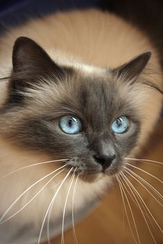 Those #Eyes! #Cat
