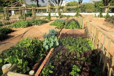 Vegetable plots in the recreated VOC gardens Herb Garden, Vegetable Garden, Thing 1, Table Mountain, Medicinal Herbs, Fruit Trees, Day Tours, Walking Tour, Cape Town