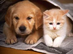 Cute Cats And Dogs, Cats And Kittens, Dog And Cat Images, Cute Puppies, Dogs And Puppies, Doggies, Funny Cat Wallpaper, Animal Wallpaper, Cartoon Wallpaper