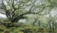 "An oak woodland in England from ""The World of Trees"""