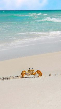 Crab...love this picture.