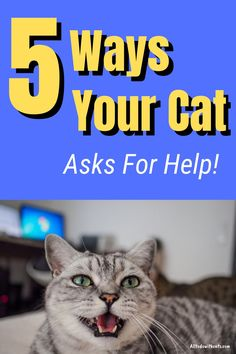 Discover 5 ways your cat asks for help. Though quieter than dogs, cats are very capable of asking for help, you just have to be aware of the signs. #waysyourcatasksforhelp #catbehaviorexplained #howcatscommunicate Cat Behavior, All About Cats, Ask For Help, 5 Ways, Animals And Pets, Dogs, Pets, Doggies, Pet Dogs