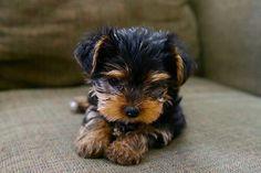 O M G !!!!!! Soooooo cute !!!