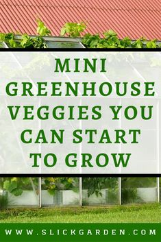 Here are some small greenhouse veggies you can start to grow right now: - Trend Greenhouse Gardening 2019 Greenhouse Vegetables, Greenhouse Growing, Small Greenhouse, Greenhouse Gardening, Organic Farming, Organic Gardening, Easy Vegetables To Grow, Veggies, Diy Greenhouse Plans