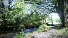A lovely walk... Respryn Woods