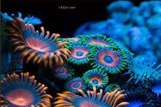 coral - Buscar con Google