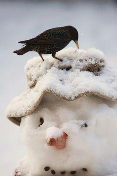 postavil jsem sněhuláka na stráni,aby hlídal kousek masa k snídani-stojí tam jako pán,asi budu hlídat sám...