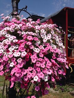Love the pink!  Hanging baskets of petunias... I'd like to have them hanging from every tree in the yard.