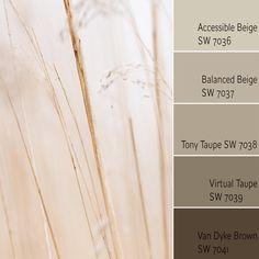 Color Scheme for Accessible Beige SW 7036 Beige Paint Colors, Beige Color Palette, Monochromatic Color Scheme, Paint Colors For Home, Color Palettes, Wall Colors, Interior Color Schemes, House Color Schemes, Interior House Colors