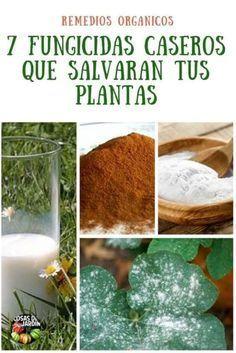 7 Fungicidas Caseros Que Un Día Te Salvarán Cosas Del Jardin Fungicidas Caseros Insecticida Natural Para Plantas Como Hacer Un Huerto