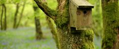 Nestbox on tree, RSPB Wood of Cree reserve; Hygiene for bird feeders.