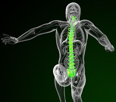 Because #fascia crosses joints, this means that it can impact the joints, including the important individual segments of the spine.