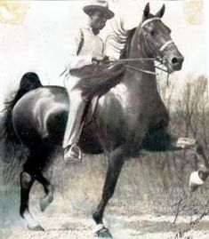 Bringing to light Black Horsemen in Saddlebred history. Tom Bass, Giraffe Neck, Walking Horse, Horse Books, American Saddlebred, Horse Quotes, African American History, Horse Art, Show Horses