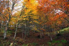 Cinco motivos para visitar Asturias en Otoño. Foto: Carlos Ugidos