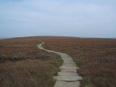 exquisite stone path