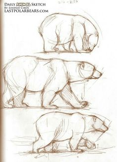 would want a black/brown bear instead of a polar bear. - Mama Bear Sketches… would want a black/brown bear instead of a polar bear. Cool Sketches, Drawing Sketches, Art Drawings, Drawing Ideas, Sketching, Pencil Drawings Of Animals, Animal Sketches, Draw Animals, Polar Bear Drawing