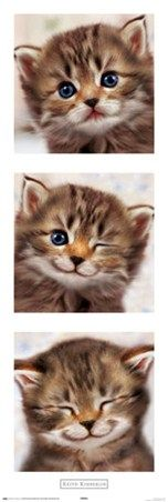 Happy Kitten - Keith Kimberlin