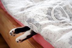 Zo kan je goed slapen tijdens de hitte! --- Slapen tijdens een hittegolf, het is bijna onmogelijk. Tijdens een warme zomernacht liggen we te woelen en te draaien, wachten tot we eindelijk eens in slaap vallen. Helaas is dat heel moeilijk, want door de extreme warmte en benauwdheid lukt het maar niet om in dromenland te komen. Je hebt al honderd schaapjes geteld en Klaas Vaak heb je al tig keer verzocht om langs te komen... ARGH! Met de tips in dit artikel slaap je als een roos in de hitte.