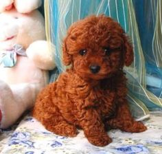 the puppy I want