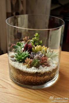Love the simplicity and the complexities of this Succulent terrarium. & then they grow...