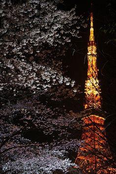 Cherry blossom w/ Tokyo Tower