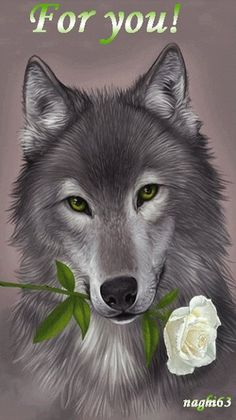 Wolf with a beautiful white rose Anime Wolf, Wolf Spirit, My Spirit Animal, Beautiful Creatures, Animals Beautiful, Mago Tattoo, Animals And Pets, Cute Animals, Fantasy Wolf