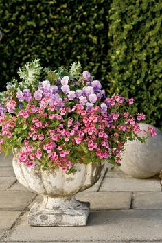 March weather is unpredictable, so for those cool days, try the prolific pink blooms of 'Strawberry Sundae' twinspurs (Diascia hybrid). They will keep looking great even when temperatures fluctuate.