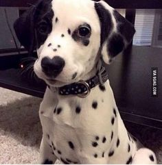 This little guy has a heart on his nose :)