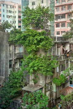 Focusing solely on the phenomena of trees sprouting from residential buildings in Hong Kong, Wild Concrete compares the living conditions between plants and humans. by Romain Jacquet-Lagreze Abandoned Buildings, Abandoned Places, Urban Nature, Dundee, End Of The World, Brutalist, Hong Kong, Beautiful Places, Exterior