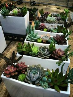 Love this modern container with succulent gardens! Found at Southeast Succulents at The Collective in Inman Park.