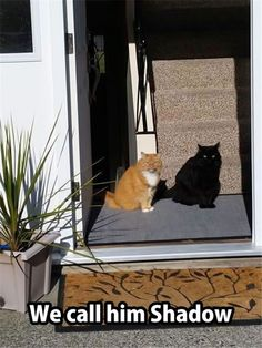 Funny cat pictures: cat looks like shadow