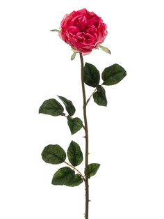 Beautiful English rose stem in striking dark pink. Add a romantic touch to your wedding decorations with this gorgeous English rose in a pretty shade of dark pink that is splashing with color. A delicate, tall and lovely rose that will be a great addition to any centerpiece, floral arrangement, or wedding bouquet that will add stunning height.