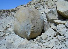 Unusual Concretions | CONTACT ORANGE COUNTY DINOSAUR