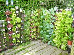 Container gardening in plastic bottles - sustainable living