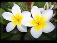 45 Meilleures Images Du Tableau Musique De Tahiti