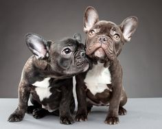 need them both......my dream doggies