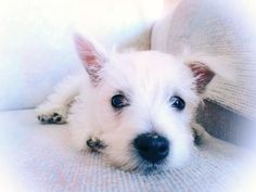 Cutie pup